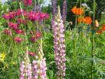 Низкорослые неприхотливые многолетники цветущие все лето фото с названиями – фото с названиями цветов для сада, бордюрные низкорослые неприхотливые долгоцветущие цветы для клумбы