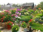Растения для дачного участка – Какие есть неприхотливые цветы для дачи