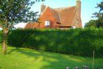 Живая изгородь на даче – Живая изгородь на даче — 100 фото лучших идей по озеленению загородных домов